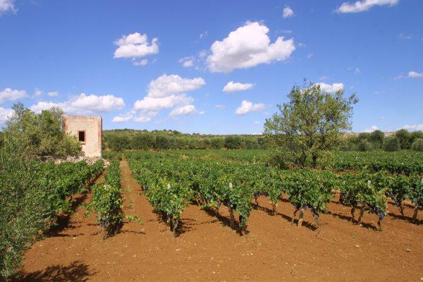 Weinverkostung Weingut A Mano, Apulien, Italien